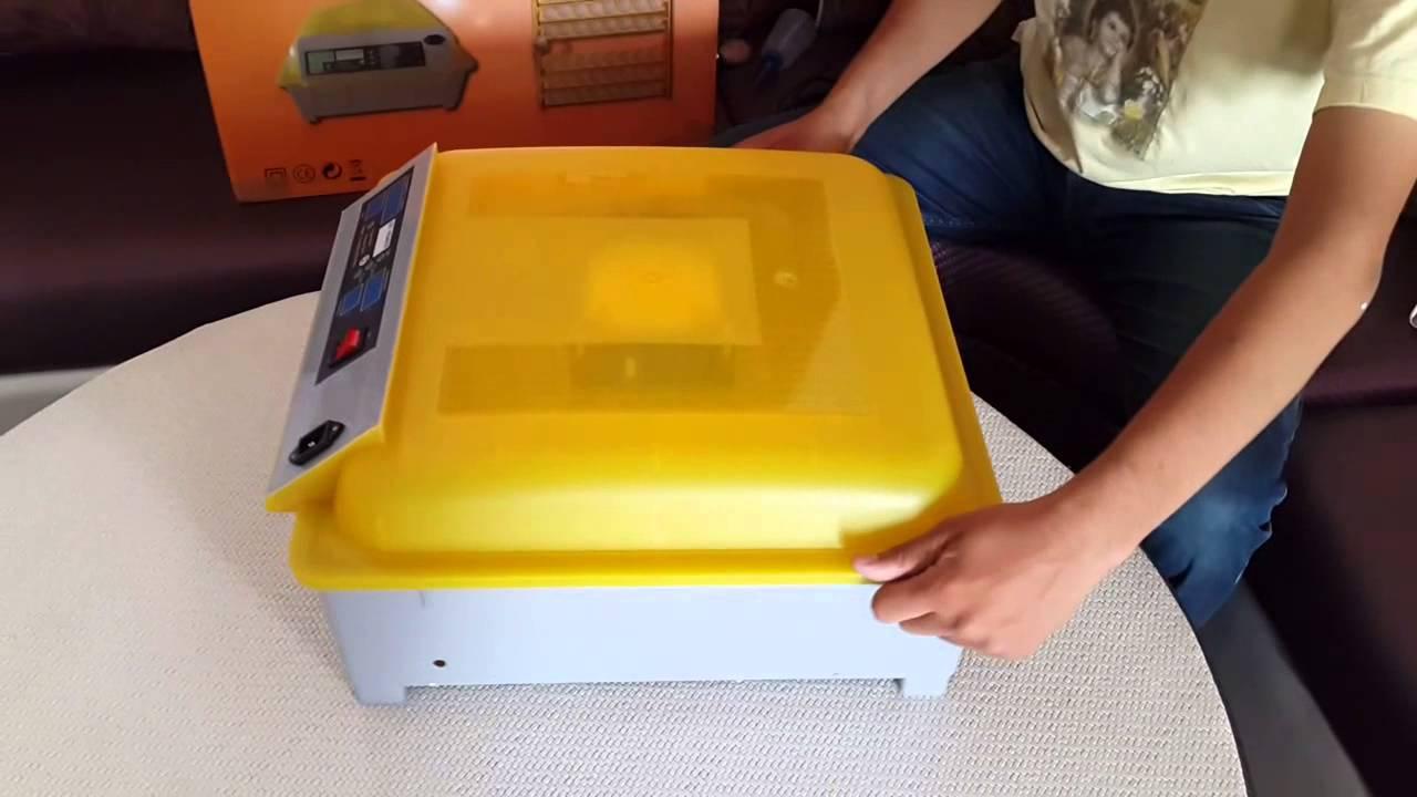 egg-incubator-clean