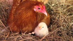 Tips on how to Diagnose and Resolve Hatching Problems