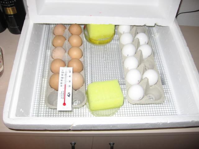 egg-incubator
