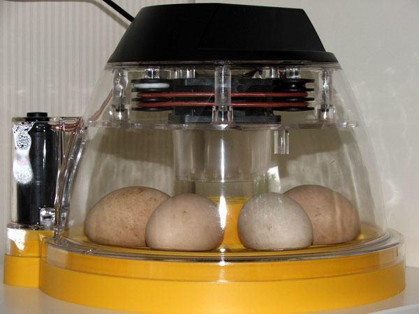 egg-incubators