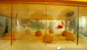 How to Maintain Correct Humidity and Ventilation in the Incubator