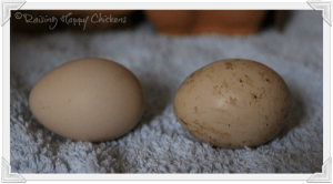 How To Choose The Right Incubator And Eggs For Hatching