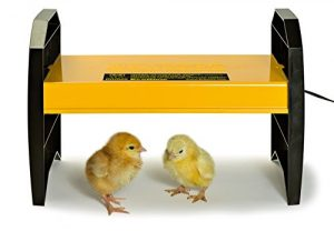 What's the Best Chicken Brooder?
